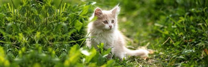 Groei en ontwikkeling van kittens