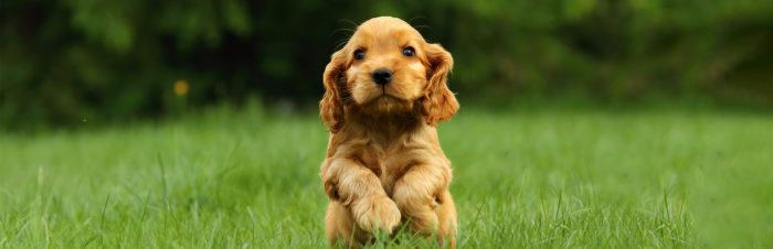 Groei en ontwikkeling van puppy's