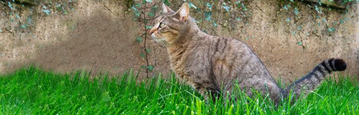 Struvietstenen bij katten