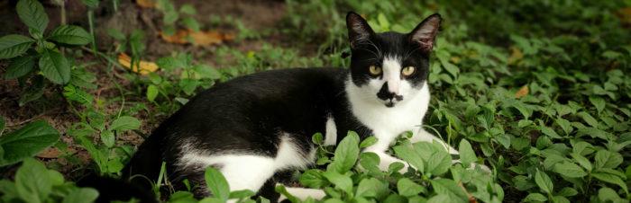 (Chronisch) nierfalen bij katten