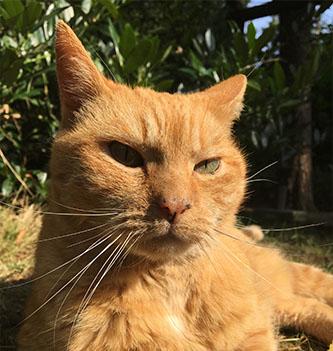 Review Mark – Senior kat