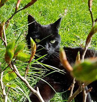 Review Carin – Skin Sensitive kat