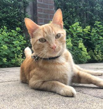 Review Monique – Anti-Struvite kat