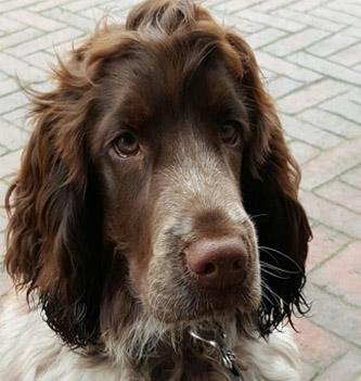 Review Bas – Anti-Struvite hond